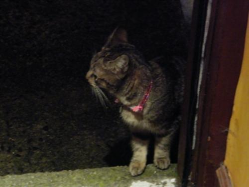 Kitten in the doorway